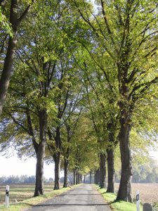 Read more about the article Herbsttag: fallende Blätter und Sonne